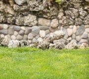 石头和裸麦草 免版税库存照片