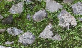 石头和青苔 库存照片