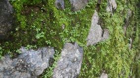石头和青苔 免版税库存图片