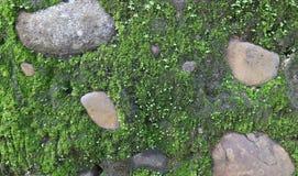 石头和青苔 图库摄影