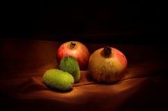 石榴和绿色金瓜 库存照片