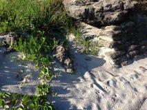石头和绿色 免版税库存照片