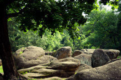 石头土墩在树下 库存图片