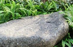 石头在有绿色蕨的庭院里 免版税图库摄影