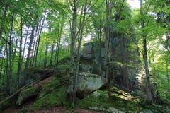 石头在森林里 库存照片