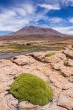 石头在沙漠 库存照片
