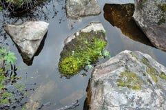 石头在水中 库存照片