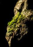 从石头增长的树 库存照片
