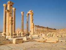 石头废墟,扇叶树头榈,叙利亚 免版税库存图片