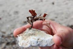 石头的植物 免版税库存图片