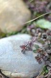 石头的植物 免版税图库摄影