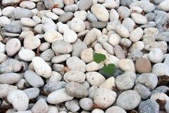 石头的第一棵植物 库存图片
