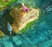 从石头的鸠饮用水 免版税库存图片