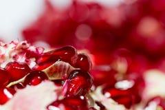 石榴红色水多的种子  库存图片