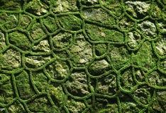 石头绿色生苔墙壁  免版税库存图片
