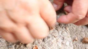 石头被击碎的榛子 免版税库存照片