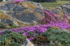 石头长满与杂草、地衣和花 库存照片