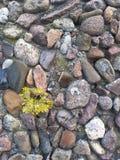 石头,青苔 库存照片
