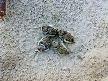 矶鹞的幼鸟在沙子的 图库摄影