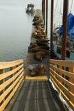 码头狮子海运 免版税库存照片