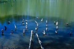 码头遗骸在池塘 免版税库存图片
