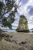 砂岩在石头后的岩石巨型独石在大教堂c的沙子 免版税库存图片