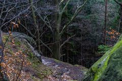 砂岩岩石在森林里 库存图片