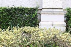 砂岩水泥柱子有绿色树篱厂背景 免版税库存照片