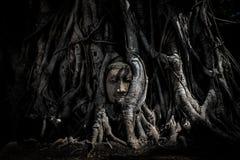 砂岩菩萨不可思议的头在树干或根树的 库存照片