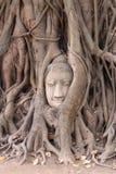 砂岩菩萨头在wat mahathad寺庙的 库存图片