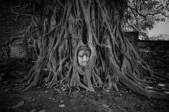 砂岩菩萨头在树根的在Wat Mahathat 免版税库存照片