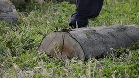 砍与一个轴的木材起重器细节木柴冬时的 关闭伐木工人分裂木头,农村场面 股票视频