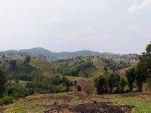 砍伐山林泰国山 免版税库存图片