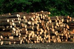 砍伐山林 免版税库存照片