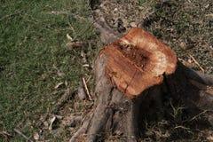 砍伐山林 库存照片