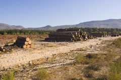 砍伐林木 图库摄影