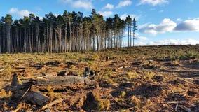 砍伐森林和采伐 股票录像