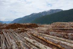 砍伐森林在加拿大 免版税图库摄影