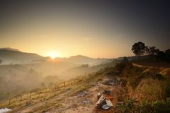 砍伐森林在泰国 免版税图库摄影