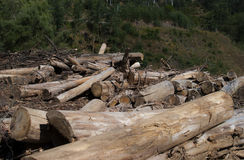 砍伐森林在葡萄牙 免版税图库摄影