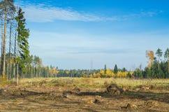 砍伐森林在Balashikha,莫斯科地区,俄罗斯 免版税库存图片