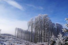 砍伐森林森林横向冬天 免版税库存图片
