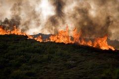 砍伐森林火 免版税库存照片