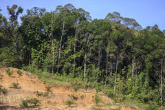 砍伐森林环境问题 免版税库存照片