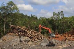 砍伐森林环境问题 免版税库存图片