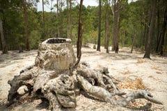 砍伐森林的作用 免版税库存图片