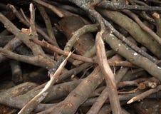 砍伐森林的风险 免版税图库摄影
