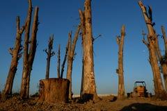 砍伐森林,从森林的Cutted树在东南亚 免版税图库摄影