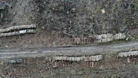 砍伐森林,环境破坏,波兰鸟瞰图  股票录像