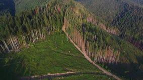 砍伐森林 在乌克兰毁坏的森林空中寄生虫视图 股票视频